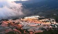 在云南种了1300年的梯田富晒红米,平常买不到的好吃…
