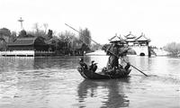 """游瘦西湖有新惊喜 """"鸬鹚捕鱼""""成""""文化品牌"""""""