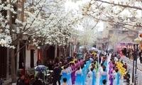 天水在线摄影报道:玉兰花开动天水,惊艳了一座城(图)