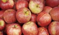 """一女生将苹果放在热水后,居然冒出大量""""血珠""""!专家:正常现象"""