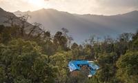 图片故事 | 在高黎贡,等待一只天行长臂猿