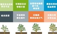 如何改造低效益橘园?保花壮花技术了解一下