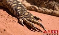 古怪的动物爪子:攀爬、打洞、猎杀各有所长