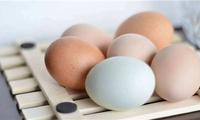年货 | 颜色不一样的鸡蛋是否营养价值也不同?