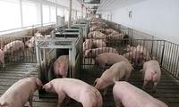 农业农村部:宁夏石嘴山市惠农区发生非洲猪瘟疫情