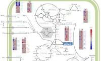 青岛能源所发现新的蓝细菌胁迫耐受关键因子