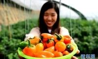 廊坊:特色种植助力乡村振兴
