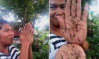 """菲律宾化妆师发出""""蚊虫低语""""吸引蚊子并快速消灭"""