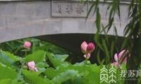 南京首例!擅采并蒂莲游客被纳入不文明行为记录