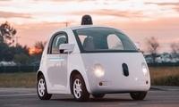 研究人员通过对皮皮虾的研究开发出更佳的自动驾驶汽车摄像头