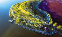 东丽区加快城市化建设 计划实施建设33条道路