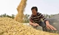 """中美""""休战期""""美国得利?外媒:中国才是大豆贸易最大赢家!"""