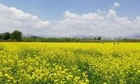 家门口赏花海 北京第九届农田观光季启动